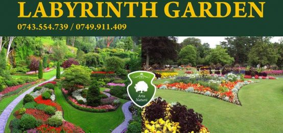 Tuia Radauti, Tuia Marginea, Depozit plante ornamentale – Labirint Garden